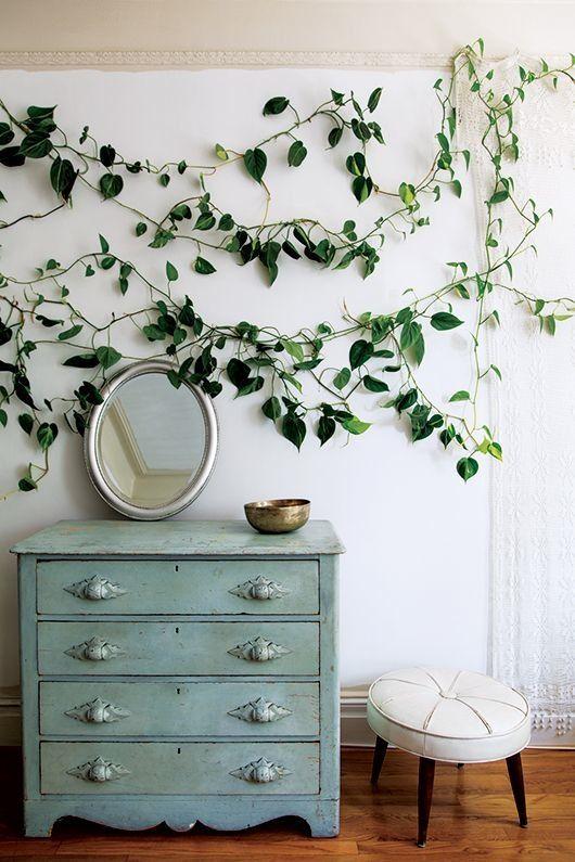 plante interieur montreal
