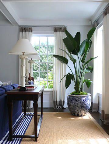 Voici les plus belles plantes d int rieur pour donner de la vie votre environnement joli for What to do with extra living room
