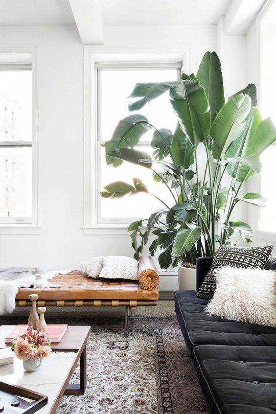 Voici les plus belles plantes d\'intérieur pour donner de la vie à ...