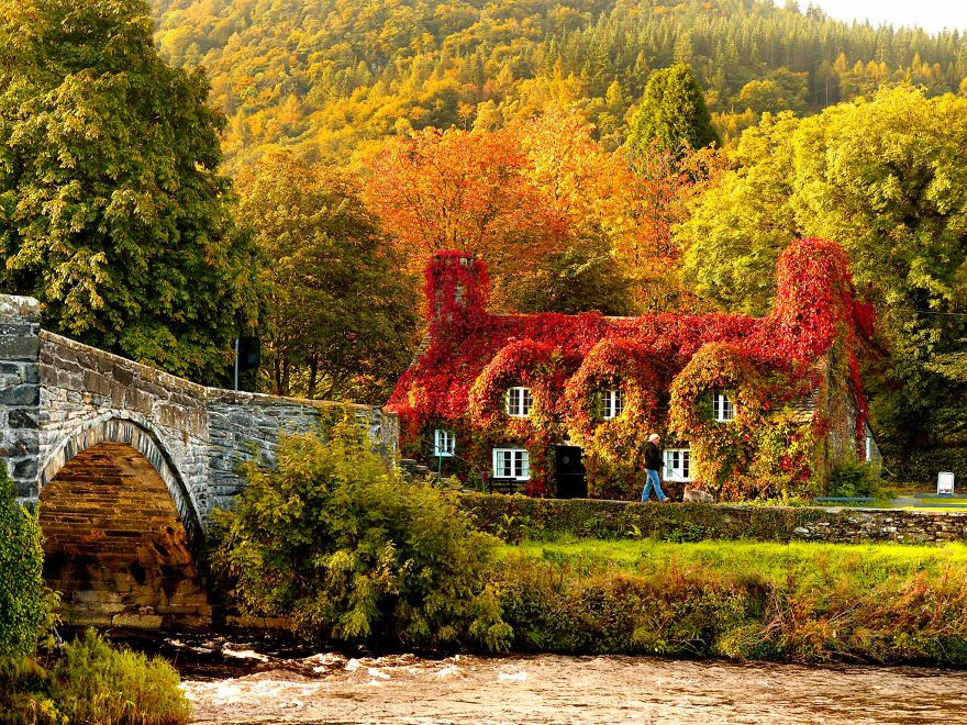 Autumn colours surround the Tu Hwnt i'r Bont tearooms on the banks of the River Conwy