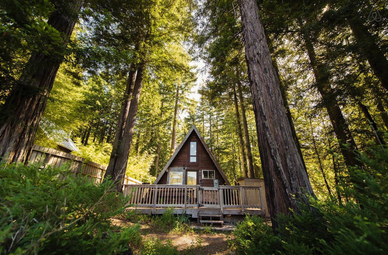 Cabin-Redwoods-Joli-Joli-Design-Cabine-14