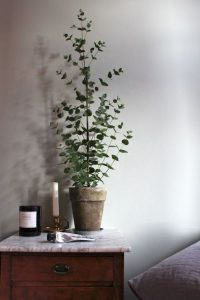 design-plantes-interieur-decoration-0