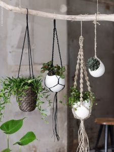 design-plantes-interieur-decoration-02
