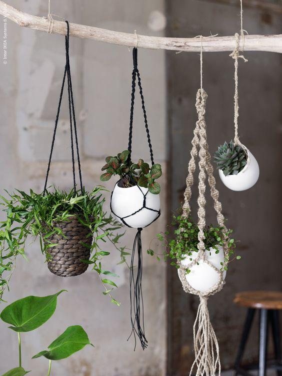 voici les plus belles plantes d int rieur pour donner de la vie votre environnement joli. Black Bedroom Furniture Sets. Home Design Ideas