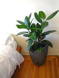 design-plantes-interieur-decoration-04