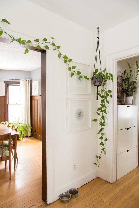 Voici les plus belles plantes d int rieur pour donner de la vie votre environnement joli - Plante d interieur grimpante ...
