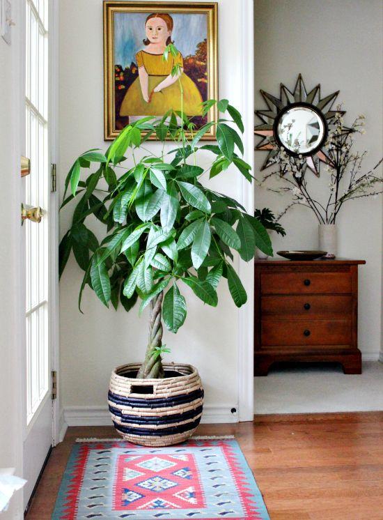 voici les plus belles plantes d'intérieur pour donner de la vie à
