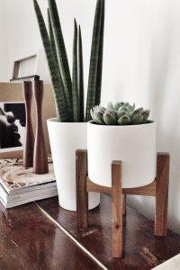design-plantes-interieur-decoration-10