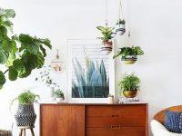 Voici les plus belles plantes d'intérieur pour donner de la vie à votre environnement