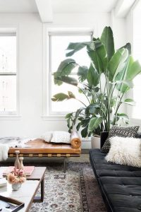 design-plantes-interieur-decoration-13