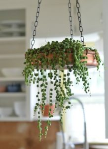 design-plantes-interieur-decoration-14