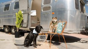 elf_boutique-airstream-roulotte-08
